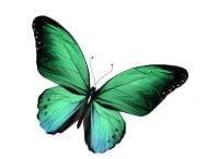 Psicologo Online - Simbolo farfalla